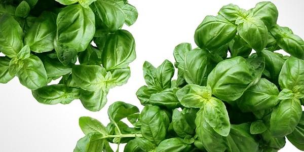 La albahaca es una planta medicinal que entre sus propiedades destaca la de antioxidante y anti-inflamatoria