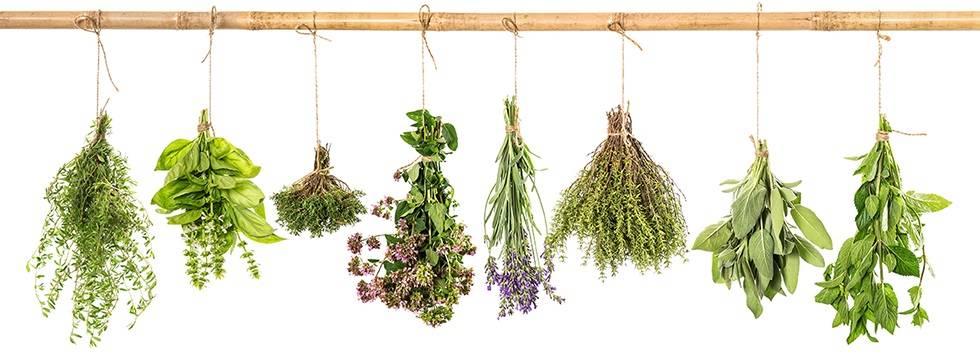 Que son y para que sirven las plantas medicinales
