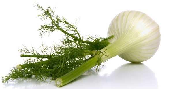 Plantas medicinales, el hinojo