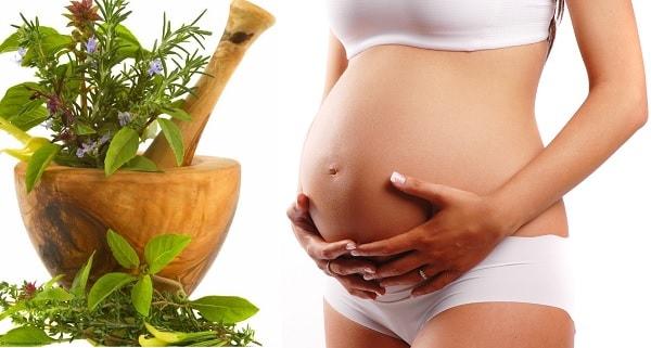 plantas medicinales para el embarazo