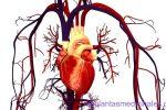 plantas medicinales para mejorar la circulación sanguínea