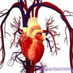 Plantas medicinales para mejorar la circulación