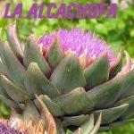 La alcachofa: propiedades curativas y beneficios