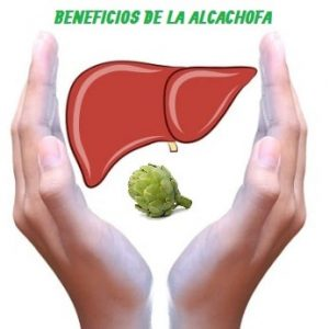 La alcachofa nos aporta múltiples beneficios