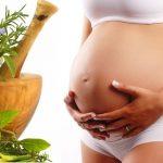 Plantas medicinales y el embarazo