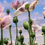 Plantas medicinales mediterráneas
