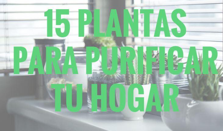 15 Plantas Para Purificar Tu Hogar