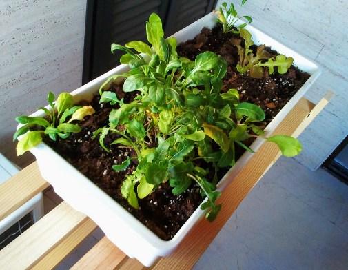 Existe una gran variedad de plantas medicinales que podemos cultivar en casa
