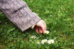 Existen muchas hierbas medicinales seguras para niños usadas como plantas medicinales
