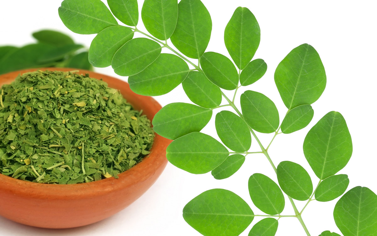 Plantas Medicinales: La Moringa