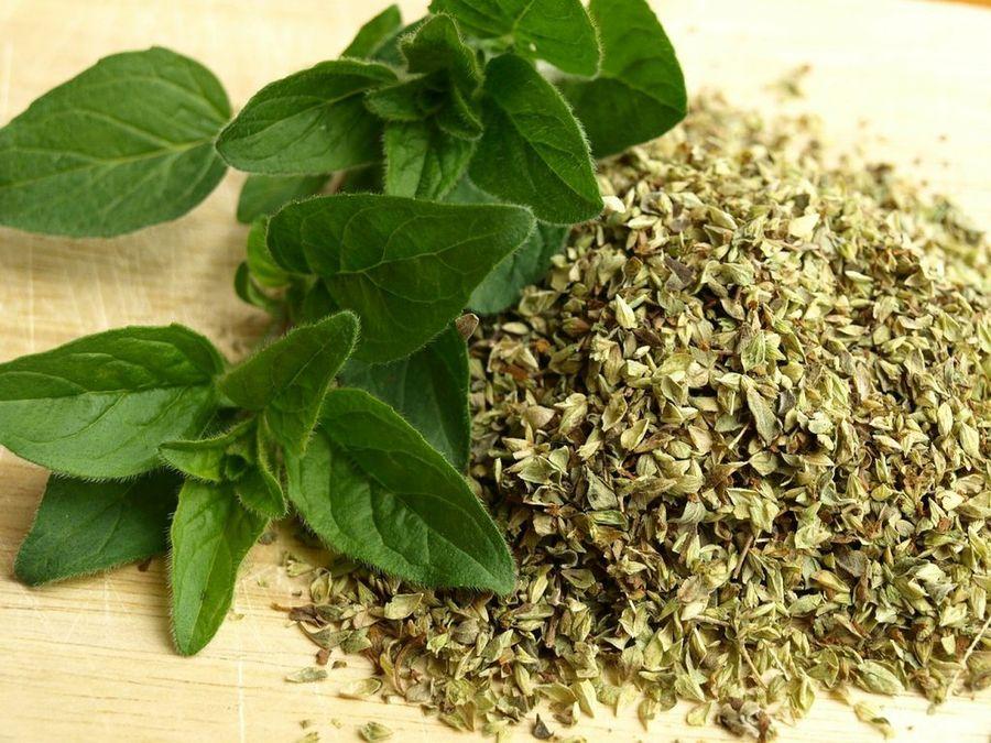 Plantas Medicinales: El Orégano