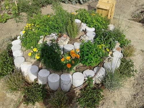 Plantas Medicinales: Hierbas Aromáticas