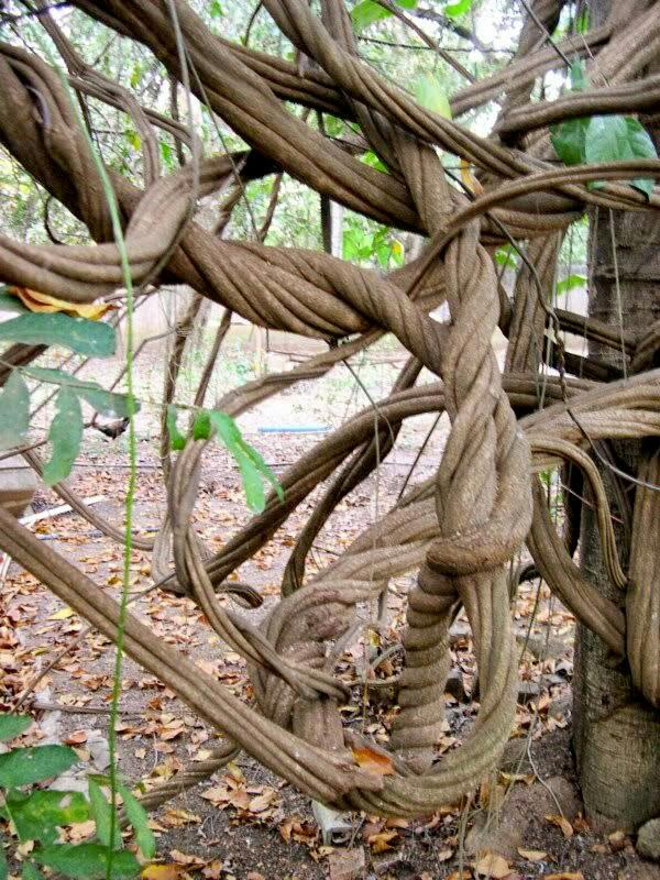 plantas medicinales indigena